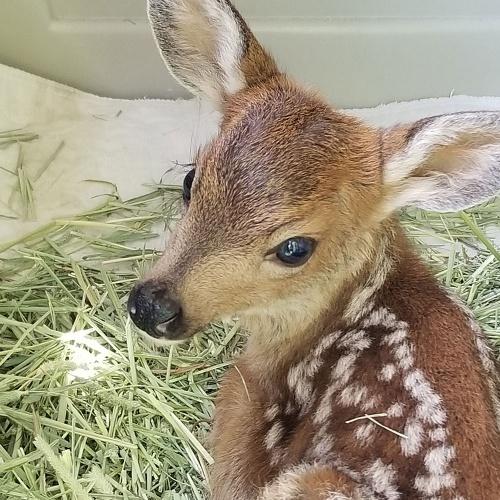 WSWS Baby Mammal
