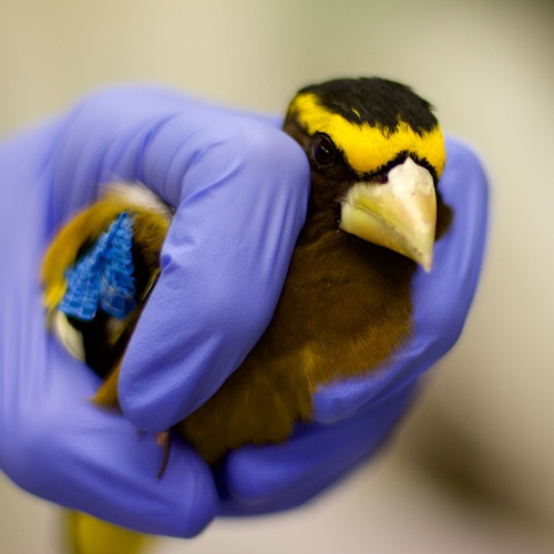 WSWS Bird Rescue