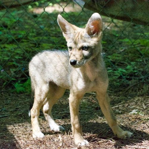 WSWS Rescue Mammal