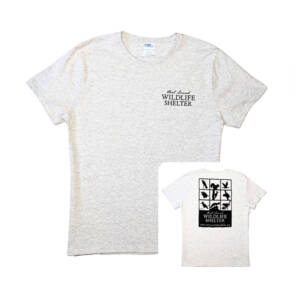WSWS ash gray ladies t-shirt