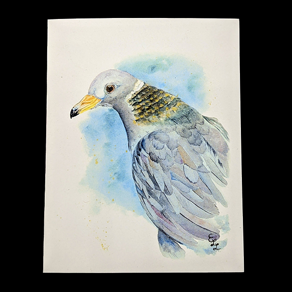 WSWS Emma gift cards pigeon